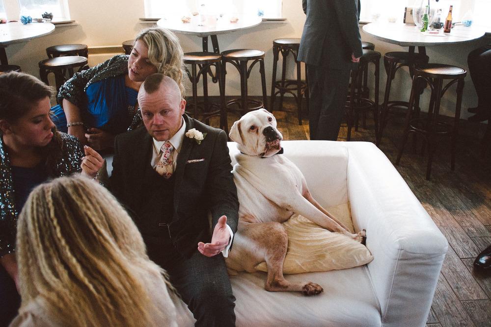 boxer dog at wedding