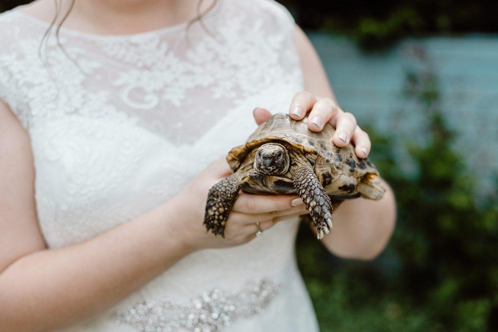 bride holding her pet tortoise.