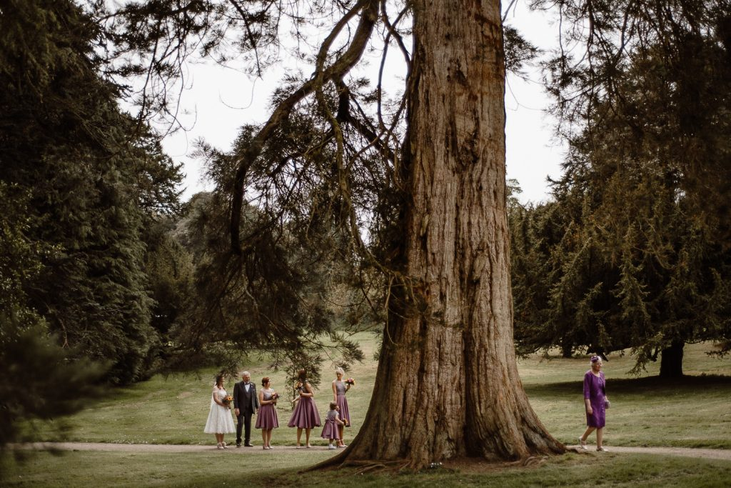 Castle ward wedding. large tree trunk with small bride and bridesmaids standing