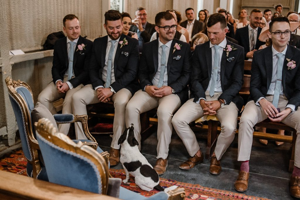 Little dog in chapel looking up at groomsmen