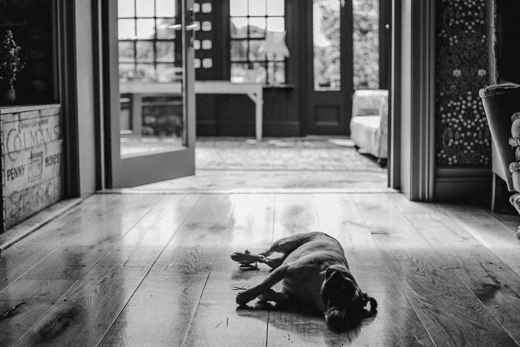 little dog lies at doorway