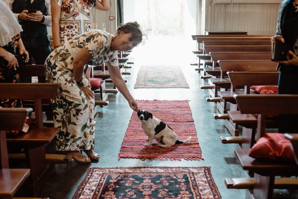wedding guest in chapel petting dog