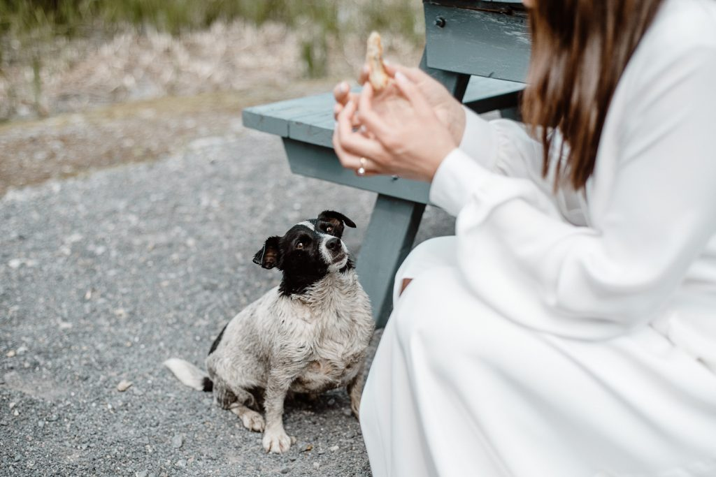 bride feeding dog some treats